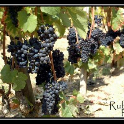 Le raisin, sous différentes formes...